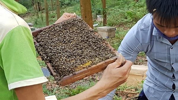 Cảnh thu hoạch mật ong tại rừng