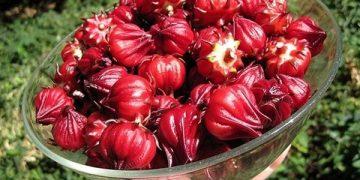 Công dụng của hoa atiso đỏ