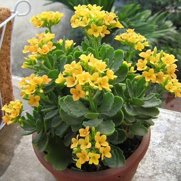 Hoa sống đời vàng