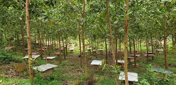 Tổ ong được đặt trên rừng