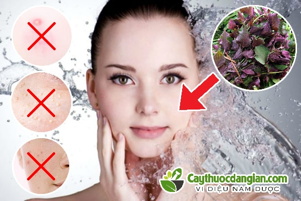 Rửa mặt bằng lá tía tô có tác dụng gì