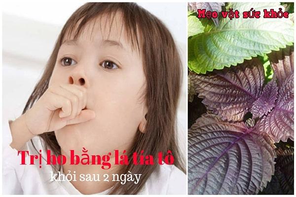 Tác dụng của lá tía tô với trẻ em