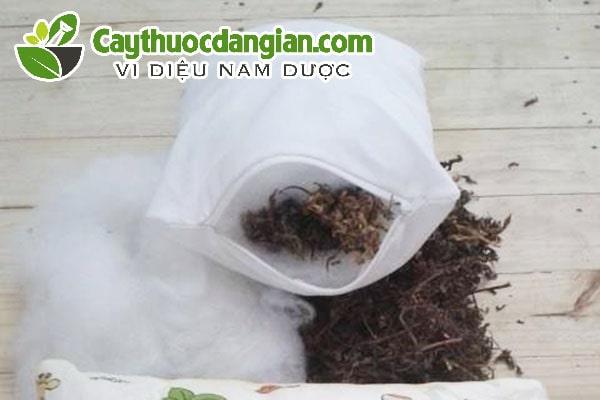 Cách làm gối lá đinh lăng tại nhà