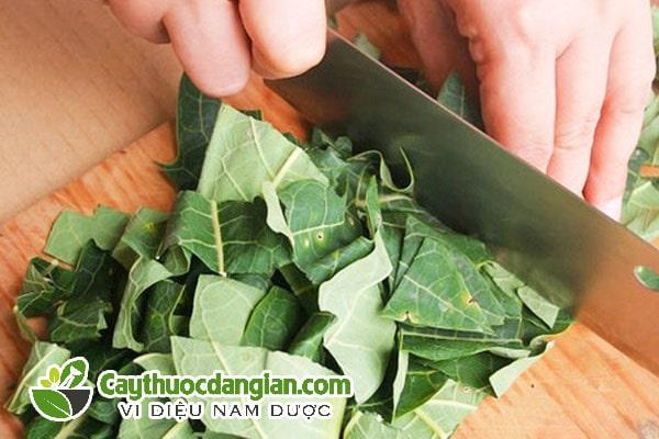 Cách nấu lá đu đủ chữa bệnh