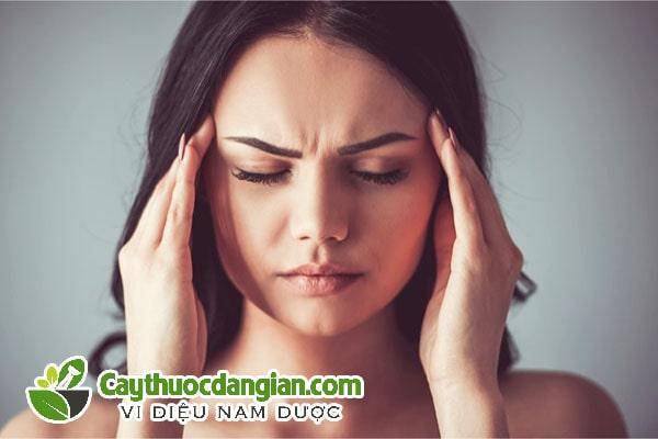 Cây duối trị đau nhức đầu