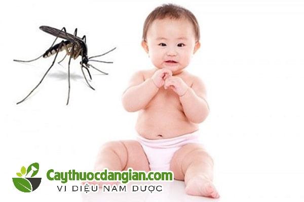 Cây tràm đuổi côn trùng