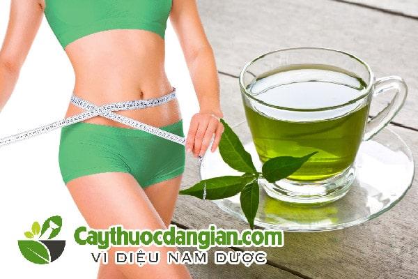 Uống lá vối có giảm cân không