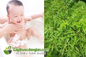 Tắm lá đinh lăng cho trẻ sơ sinh