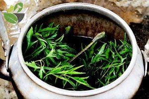 Cách nấu nước lá đinh lăng