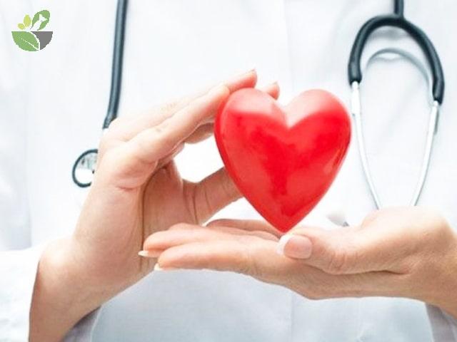 Đậu đen xanh lòng bảo vệ tim mạch